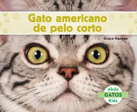Cover: Gato americano de pelo corto