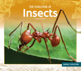 Cover: The Evolution of Insects