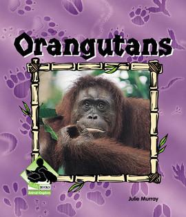 Cover: Orangutans