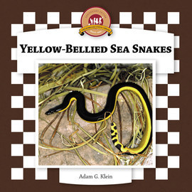 Cover: Yellow-Bellied Sea Snakes