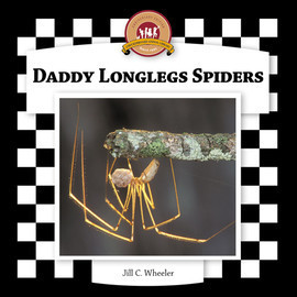Cover: Daddy Longlegs Spiders