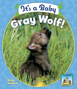 Cover: It's a Baby Gray Wolf