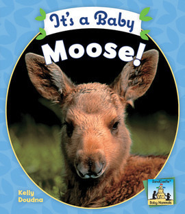 Cover: It's a Baby Moose