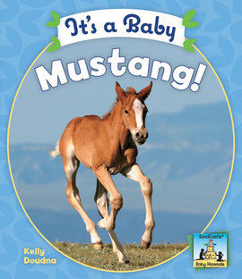 Cover: It's a Baby Mustang
