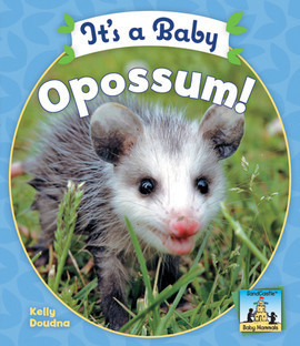 Cover: It's a Baby Opossum