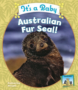 Cover: It's a Baby Australian Fur Seal!
