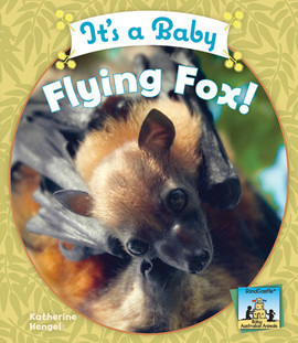 Cover: It's a Baby Flying Fox!