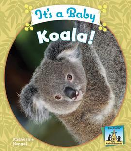 Cover: It's a Baby Koala!