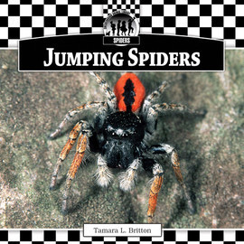 Cover: Jumping Spiders