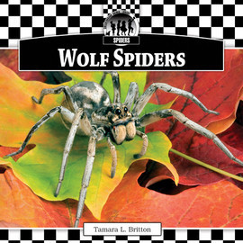 Cover: Wolf Spiders