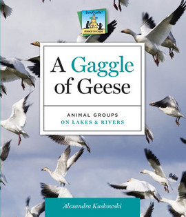 Cover: Gaggle of Geese: Animal Groups on Lakes & Rivers