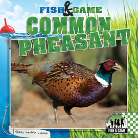 Cover: Common Pheasant
