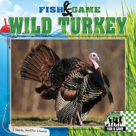 Cover: Wild Turkey