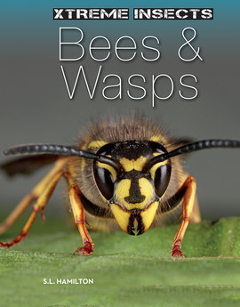 Cover: Bees & Wasps