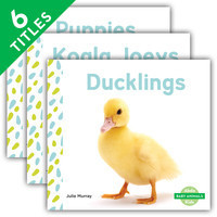 Cover: Baby Animals