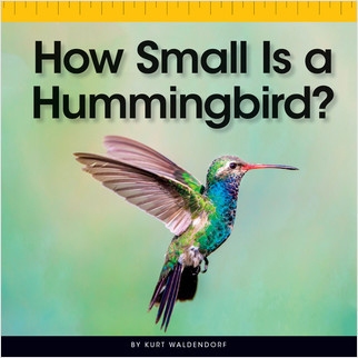 Cover: How Small Is a Hummingbird?