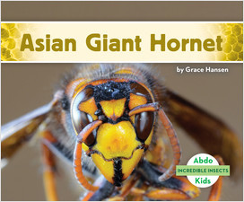 Cover: Incredible Insects
