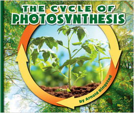 Cover: The Cycle of Photosynthesis