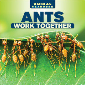 Cover: Animal Teamwork