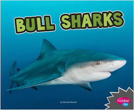 Cover: All About Sharks