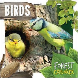 Cover: Forest Explorer