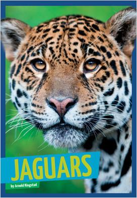 Cover: Jaguars