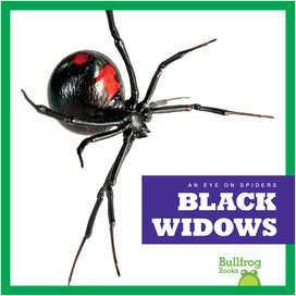 Cover: An Eye on Spiders