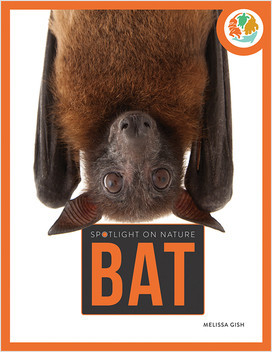Cover: Bat