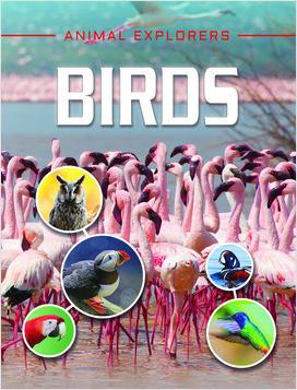 Cover: Animal Explorers