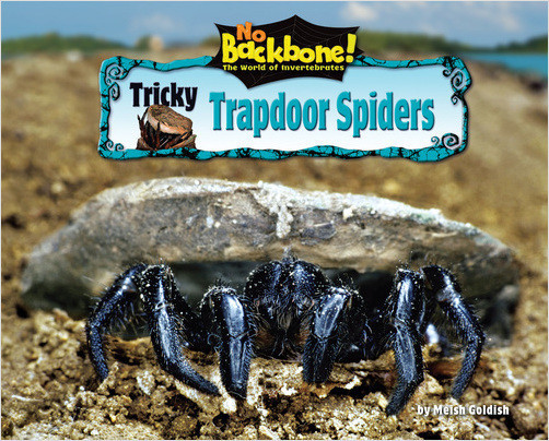 Cover: Tricky Trapdoor Spiders