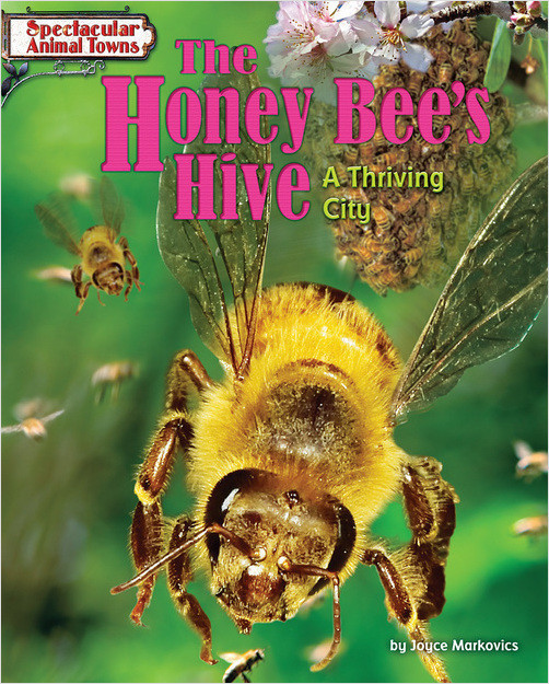 Cover: The Honey Bee's Hive