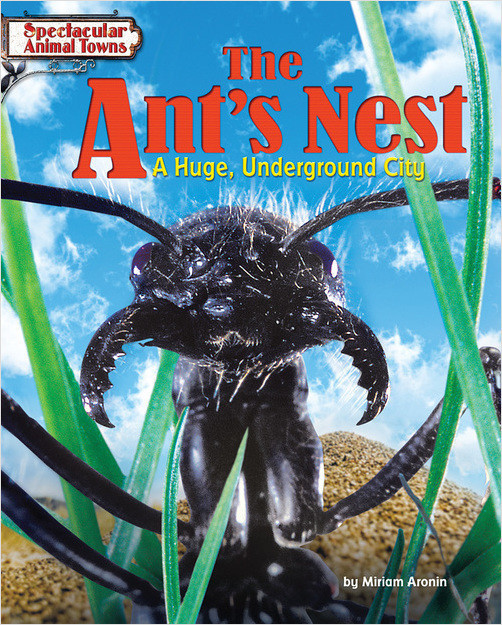 Cover: The Ant's Nest