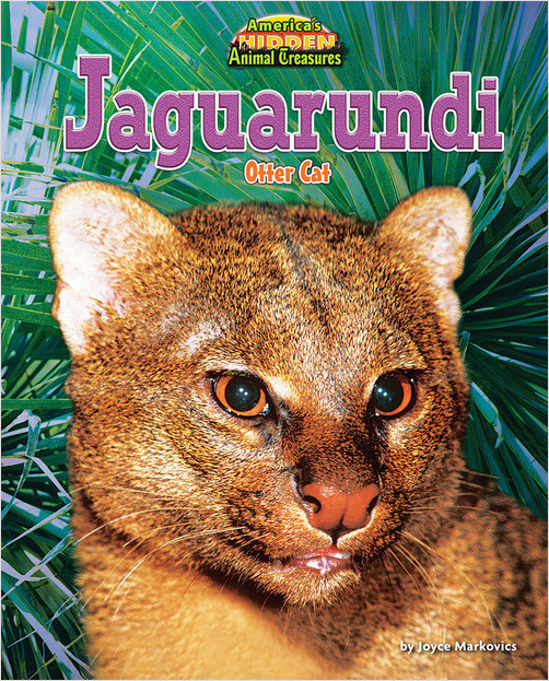 Cover: Jaguarundi