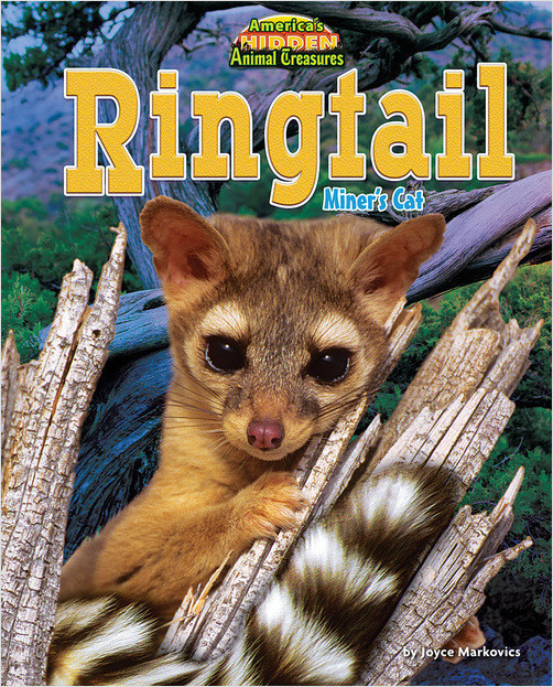 Cover: Ringtail
