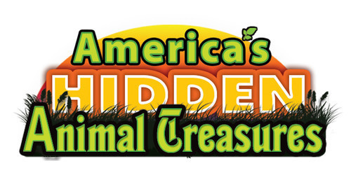 Cover: America's Hidden Animal Treasures