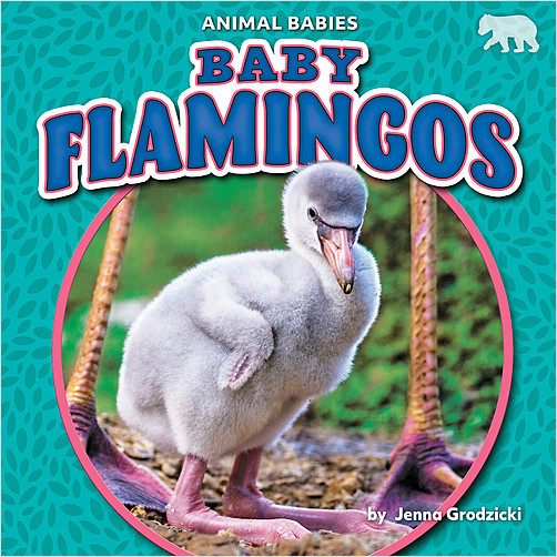 Cover: Baby Flamingos