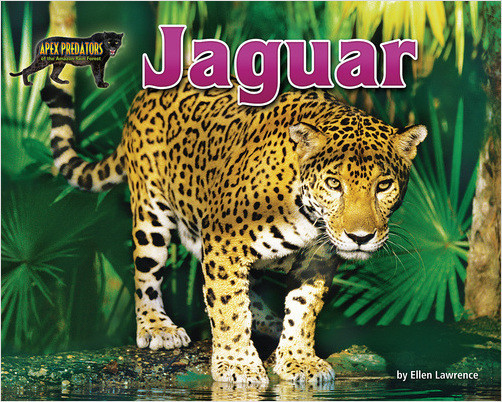 Cover: Jaguar