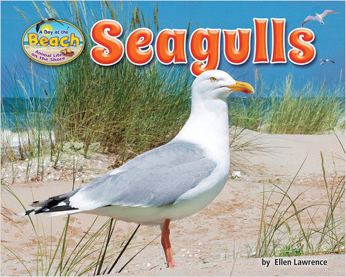 Cover: Seagulls