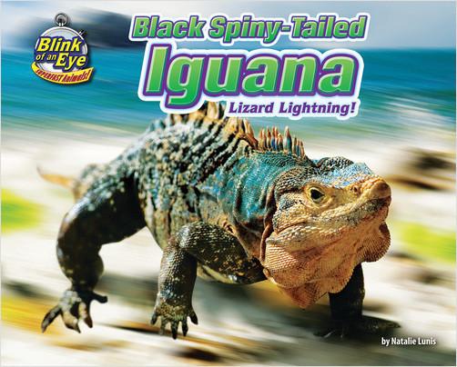 Cover: Black Spiny-Tailed Iguana