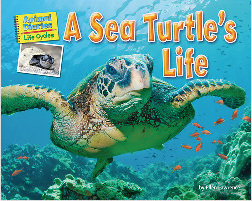 Cover: A Sea Turtle's Life
