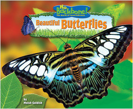 Cover: Beautiful Butterflies