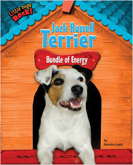 Cover: Jack Russell Terrier: Bundle of Energy
