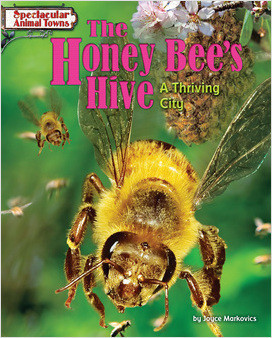 Cover: The Honey Bee's Hive: A Thriving City