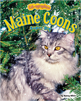 Cover: Maine Coons