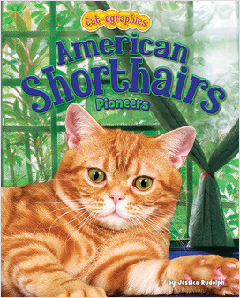 Cover: American Shorthairs