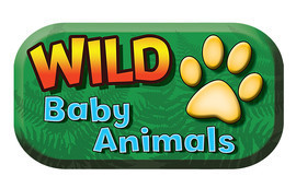 Cover: Wild Baby Animals