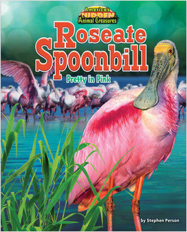 Cover: Roseate Spoonbill