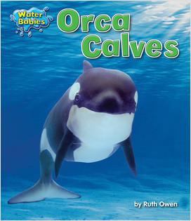 Cover: Orca Calves