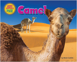 Cover: Camel