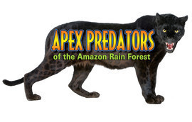 Cover: Apex Predators of the Amazon Rain Forest
